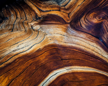 """JUNIPER ABSTRACT""White Mountains, CaliforniaContrasts and lines form an intimate look at an old Juniper in the White Mountains.© Chris Moore - Exploring Light PhotographyPURCHASE A PRINT"