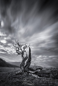 """SHATTERED""Northern MontanaMonochrome rendition of a five minute exposure capturing cloud streaks behind a gnarled Whitebark Pine, illuminated by the full moon.© Chris Moore - Exploring Light PhotographyPURCHASE A PRINT"