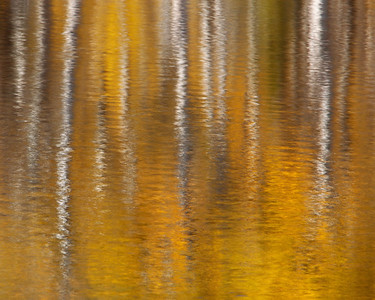 """QUIET REFLECTION I""Glacier NPVibrant fall color and aspens reflected on a quiet pond.© Chris Moore - Exploring Light PhotographyPURCHASE A PRINT"