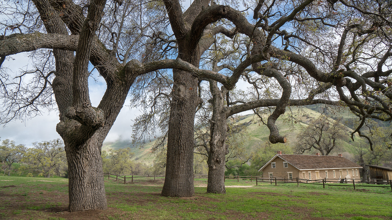 Valley Oaks with Enlisted Barracks at Fort Tejon