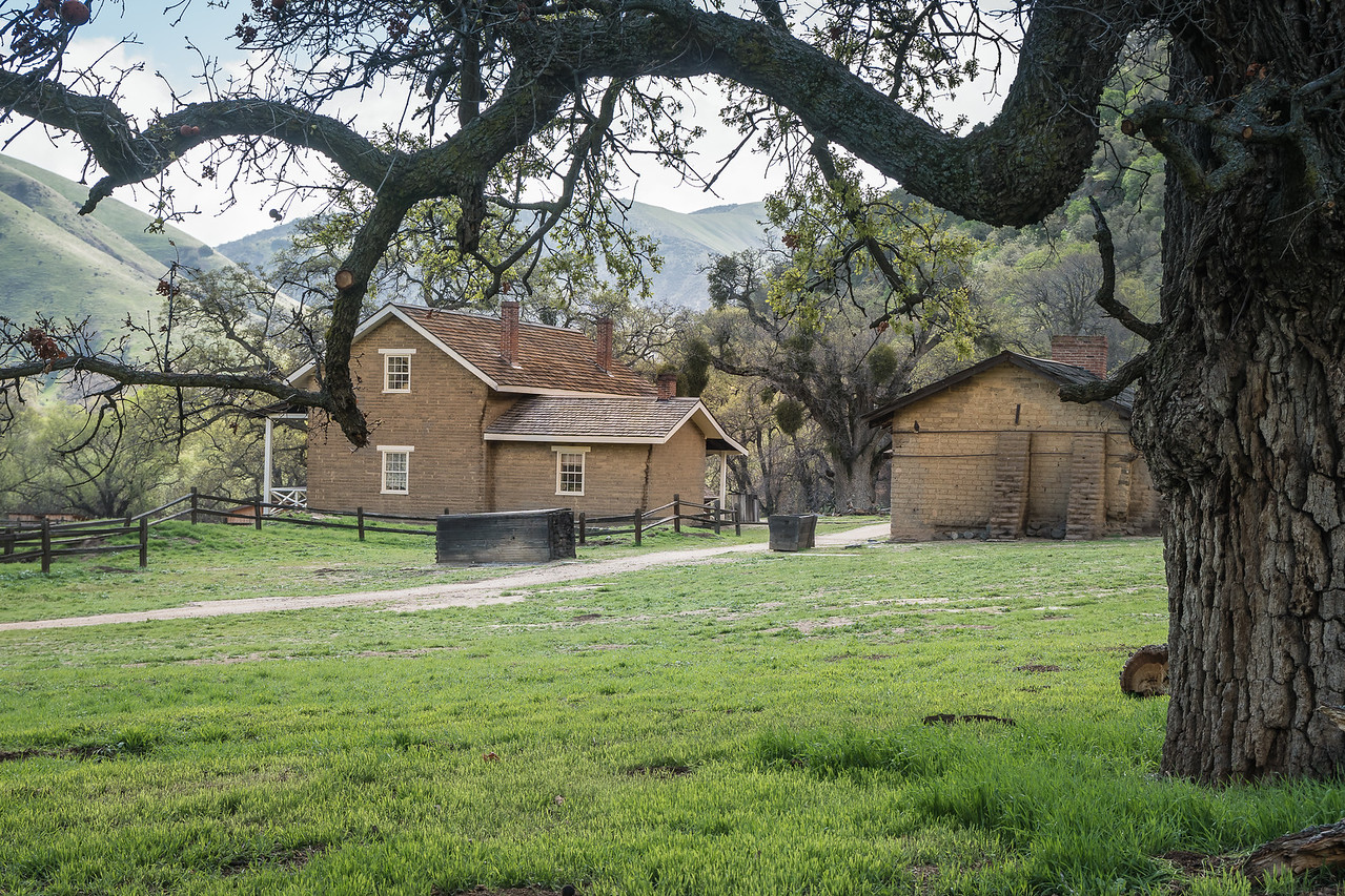 Valley Oak frames the Commander's Quarters at Fort Tejon
