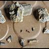Fossils from Shark's Tooth Ridge (near San Ysidro, New Mexico)