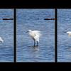 egret fluff