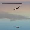 serene flight