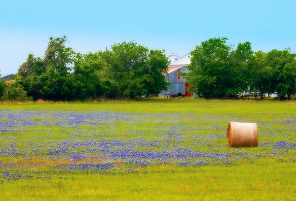 bluebonnet barn