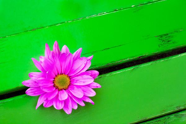 sat daisy