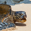 turtle protest