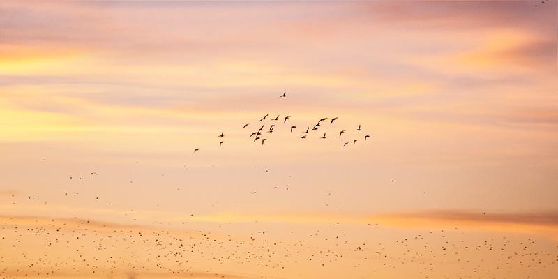 JHP 20180131--27 birds at dawn