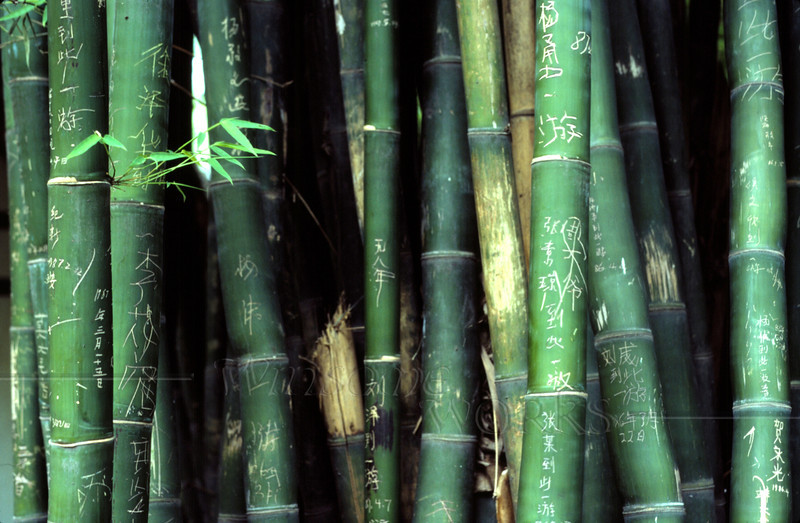 """Bamboo Graffiti"" seen near Three Poets memorial - 12""x16"" Print Format (Already matted & framed)"