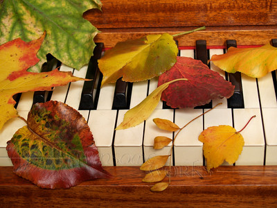 """Autumn Leaves Tickling the Ivories!  - Large 16x20"""" Print, & smaller print"""