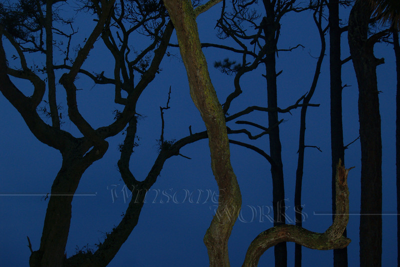 """Twisted Trees in Twilight"" - Hunting Island State Park, SC - 8"" x12"" Print Format  (Not yet matted or framed)"