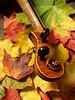 Maple Violin Scroll on Autumn Maple Leaves