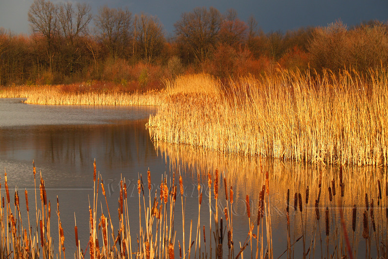 """""""Quakertown Marsh Before Storm in Spring"""" - 12""""x18"""" Print Format  (Not yet matted or framed, but I have these materials on hand)"""