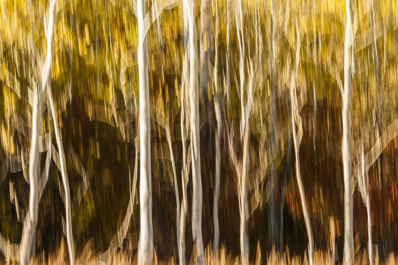 Study In Abstract No. 11, Grand Teton NP