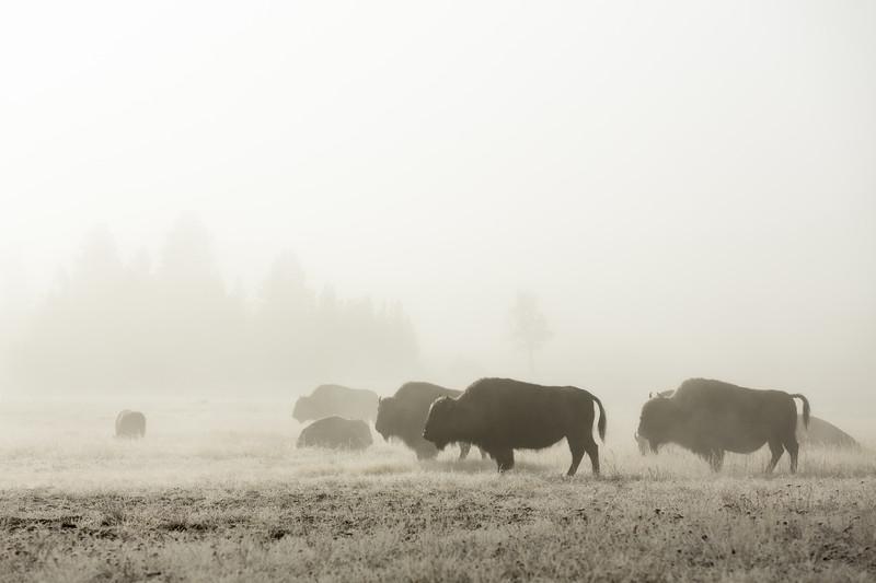 Foggy Flats