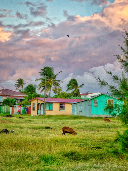 Colourful Houses at Sunrise, Barbados
