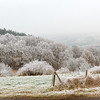 Frosty Afternoon, on the road to Meisenheim, Germany