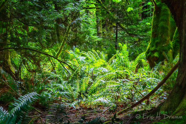 Forest Sunlight, Ruckle Provincial Park, Salt Spring island, British Columbia