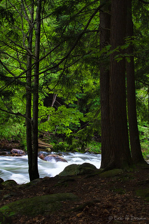 Through the Trees, Gull River, Haliburton, Ontario