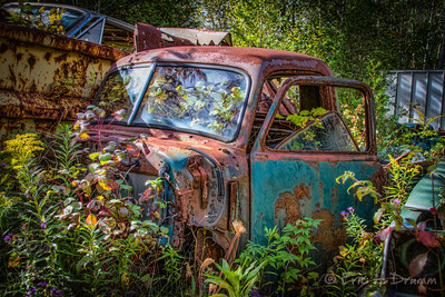 Resting Among Friends, McLean's Auto Wreckers, Milton, Ontario