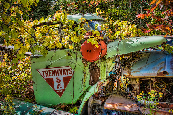 Reclaimed by Nature, McLean's Auto Wreckers, Milton, Ontario