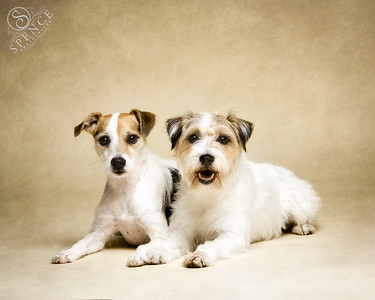 Willow & Lexie (Parson Russell Terriers)