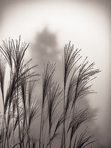 Grass, tree, and fog