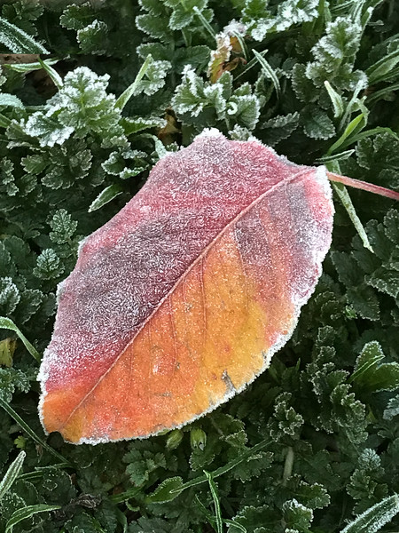 Bright reds and oranges sparkled in the frosty morning