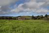 California Pasture