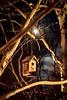 Bird House and Moonlight