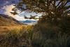 Mount Alfred from Kinloch