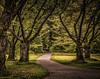 Stanley Park Path