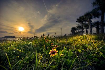 Flowers After Sunrise