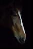 Horse Head in Profile