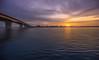 Sarasota Dawn