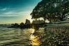 Island Park Sarasota