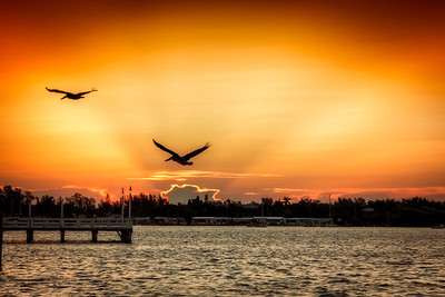 Pelican Commute