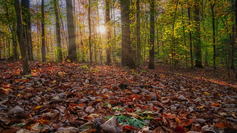 Forest Carpet