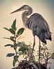 Heron on a Palm