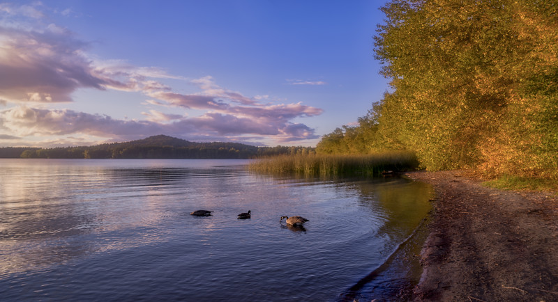 Elk Lake Geese