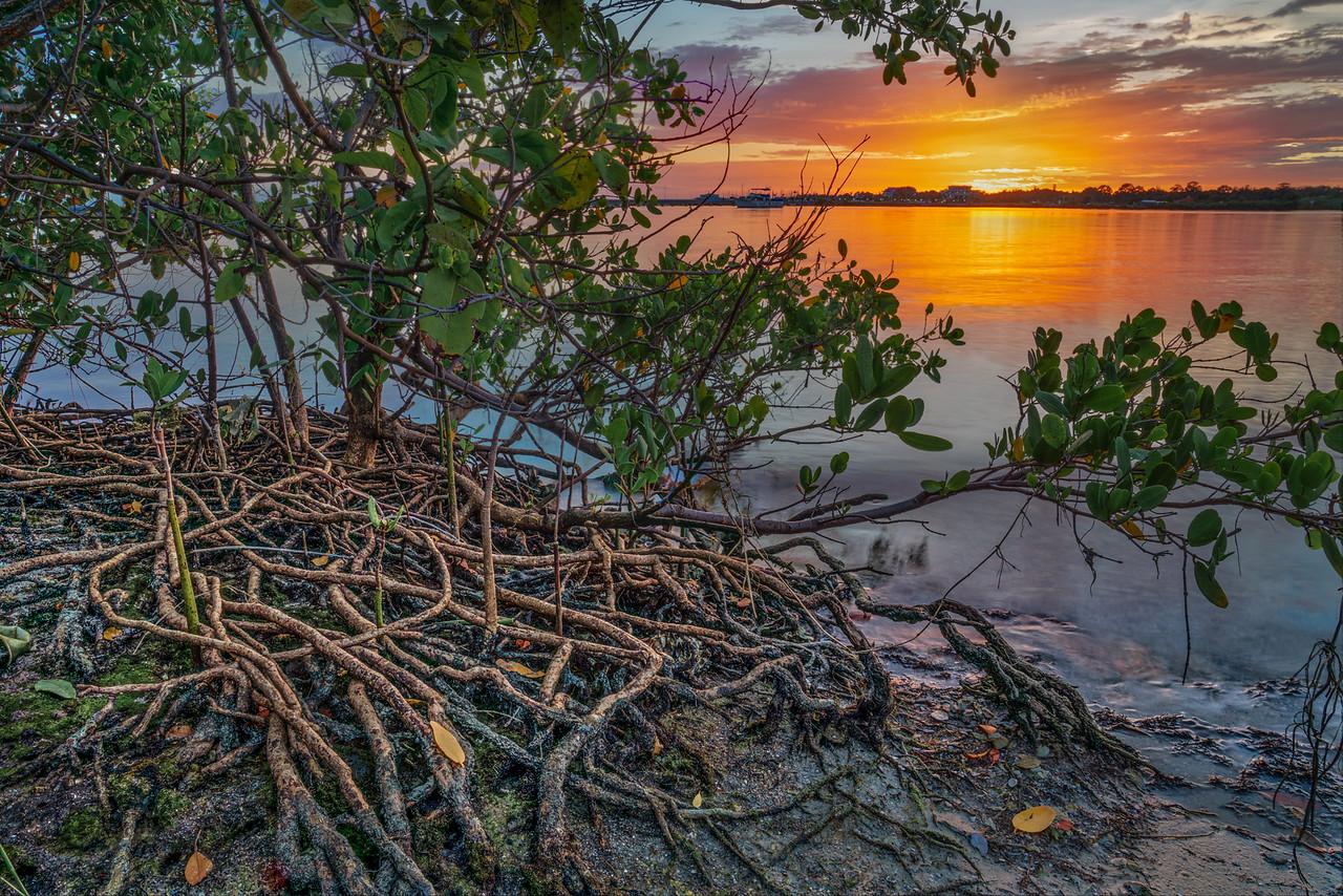 Hometown Mangroves