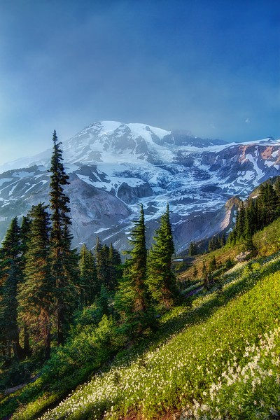 Mount Rainier with a Meadow of Avalanche Lilies