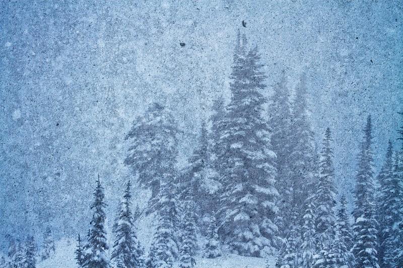 Frozen Blizzard at Mount Rainier