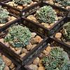 Succulent Planted Gabion