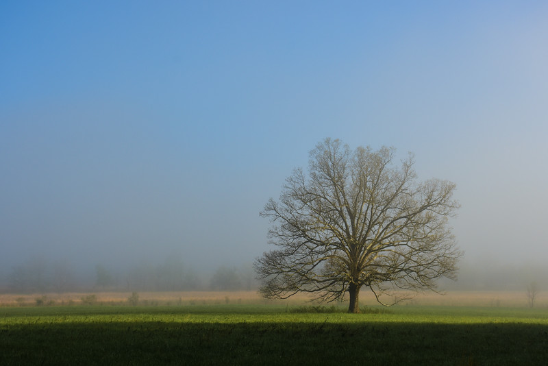 """Fog Surrounds The Tree"""