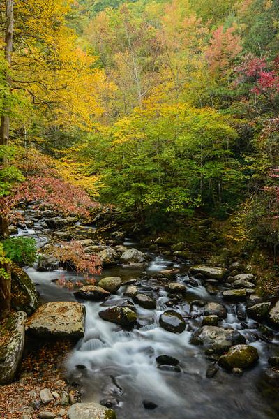 """Autumn At Tremont"""