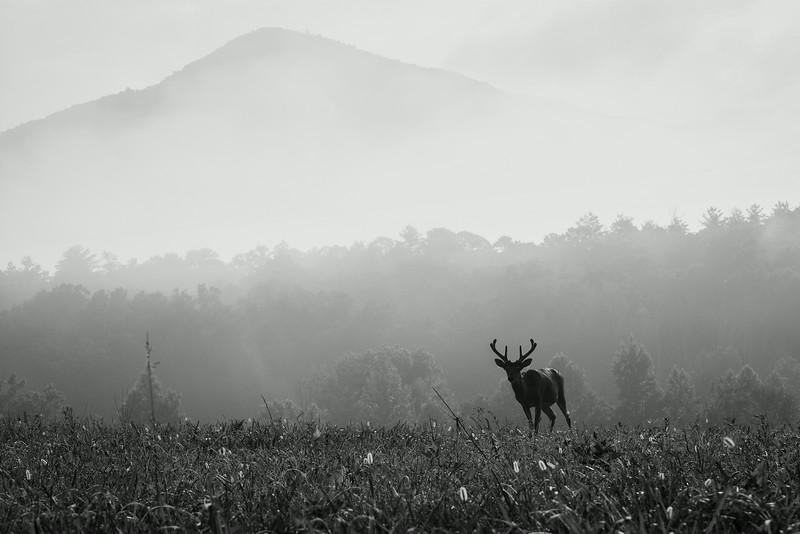 """""""Fog In The Field"""""""