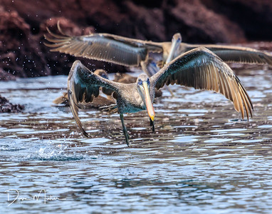 Galapagos_day6_AM_7D_MKII-20170202-0235