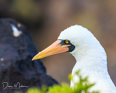 Galapagos_Day1_plus_AM_day_2_7D_MK_2-20170129-0345