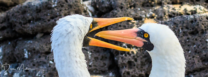 Galapagos_Day1_plus_AM_day_2_7D_MK_2-20170129-0305